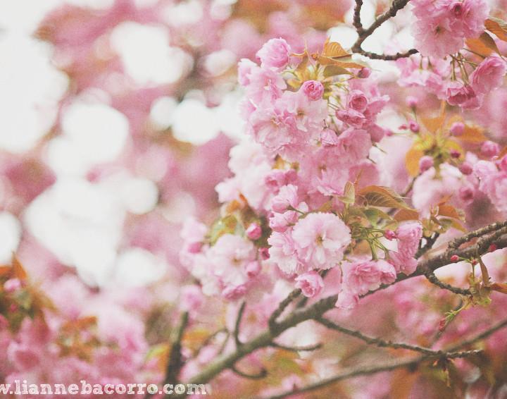 Last Year - Spring Break in Maryland