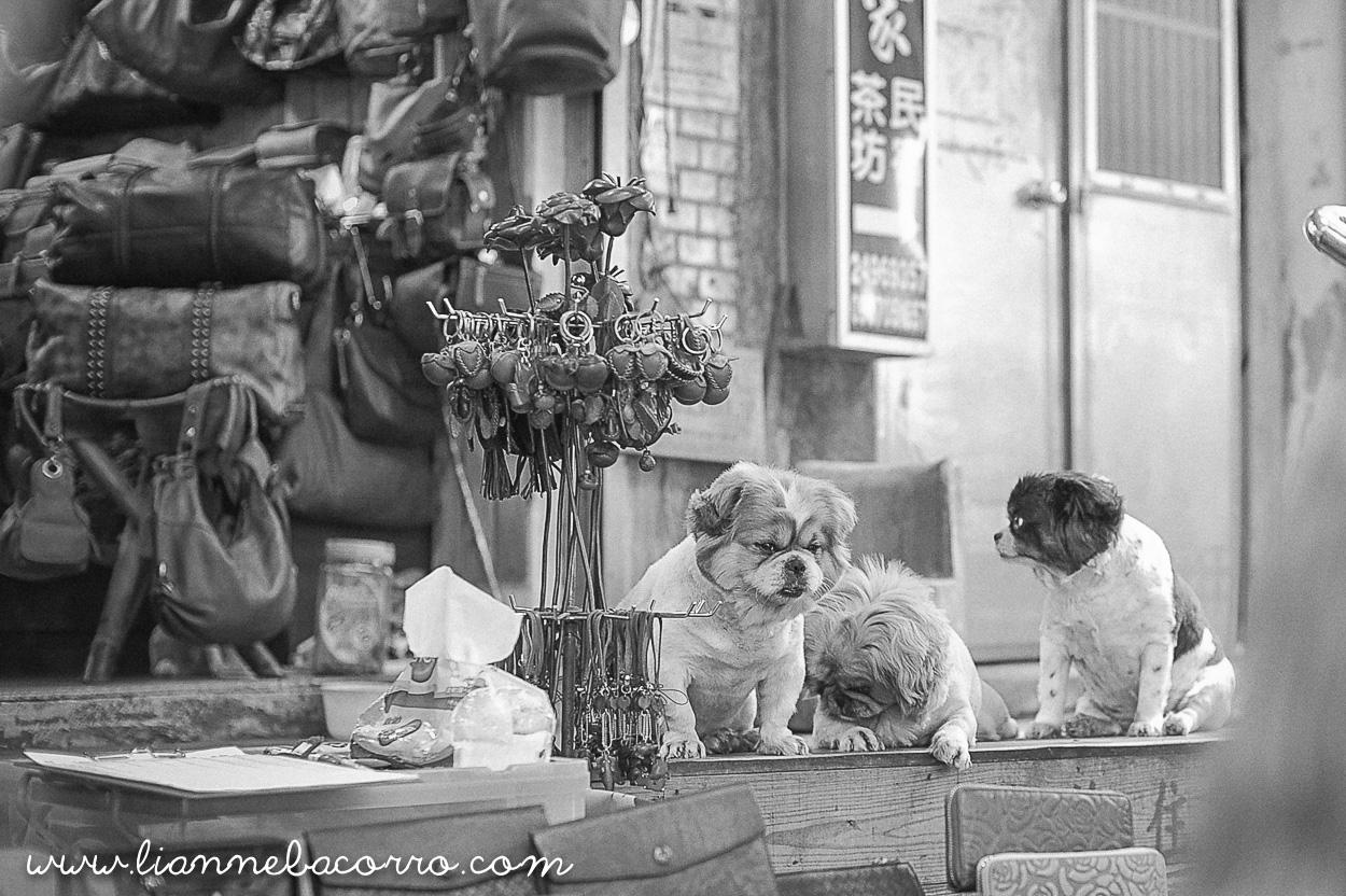 2015 Jiufen Old Street Taipei Taiwan Travel Photography - Lianne Bacorro-40